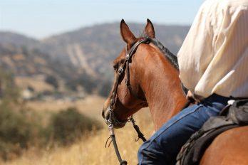 La France à l'affût des jeux équestres mondiaux